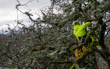 experienced Lincoln arborists are needed