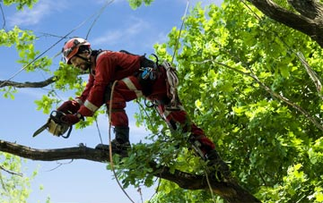 find trusted rated Lincoln tree surgeons in Lincolnshire