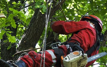 hiring professional Lincoln tree surgeons