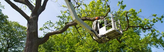 Lincoln tree surgery services
