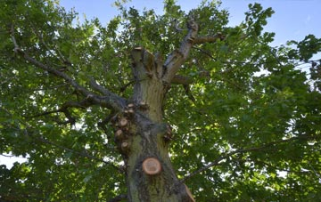 what is Lincoln tree surgery?